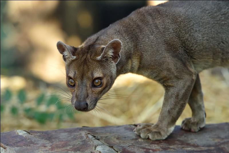 Je suis Madagascar, je suis encerclé par le Canal du Mozambique et l'Océan Indien !