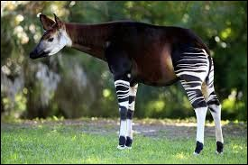 Quel est le nom de cet animal présenté sur la photo ?