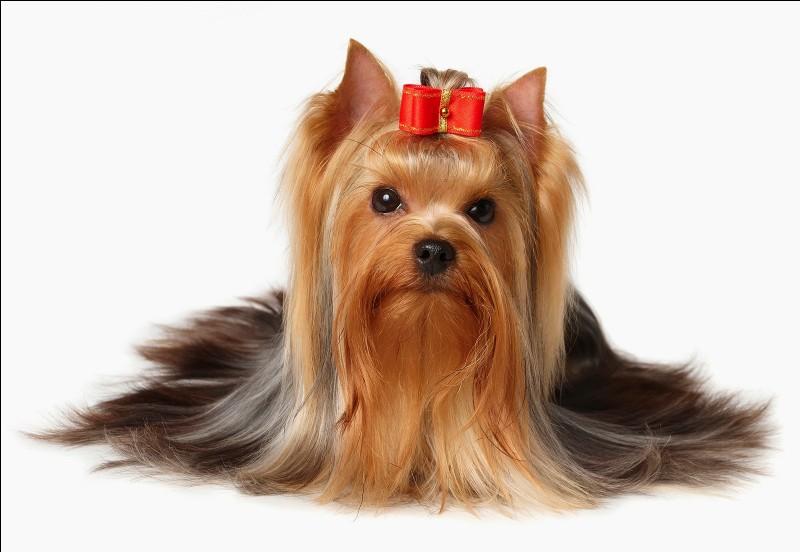 Comment sont les poils des chiens ?