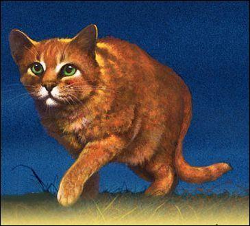 Comment se nomment les chatons de Poil d'Écureuil ?