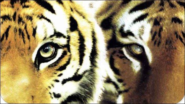 Quel est le film de Jean-Jacques Annaud qui raconte la vie de 2 tigres ?