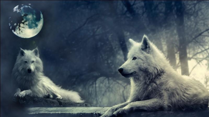 """Par qui a été écrit le roman """"La vallée de la lune"""", auteur d'un autre livre que l'image doit vous inspirer ?"""