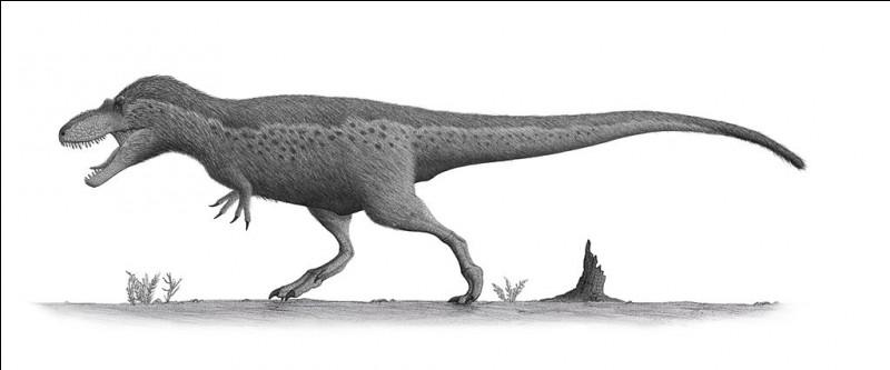 Daspletosaurus était léger par rapport à sa taille et aux mensurations de ses congénères.