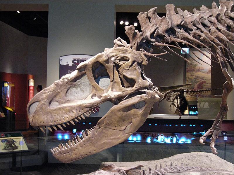 Quelle taille atteignait la longueur du crâne de Daspletosaurus ?