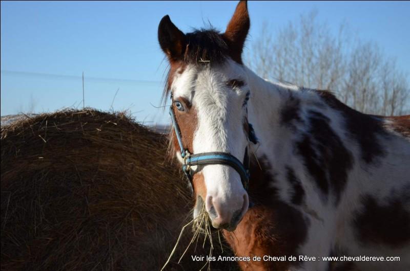 Quelle est la température d'un cheval qui travaille régulièrement et qui est en bonne santé ?