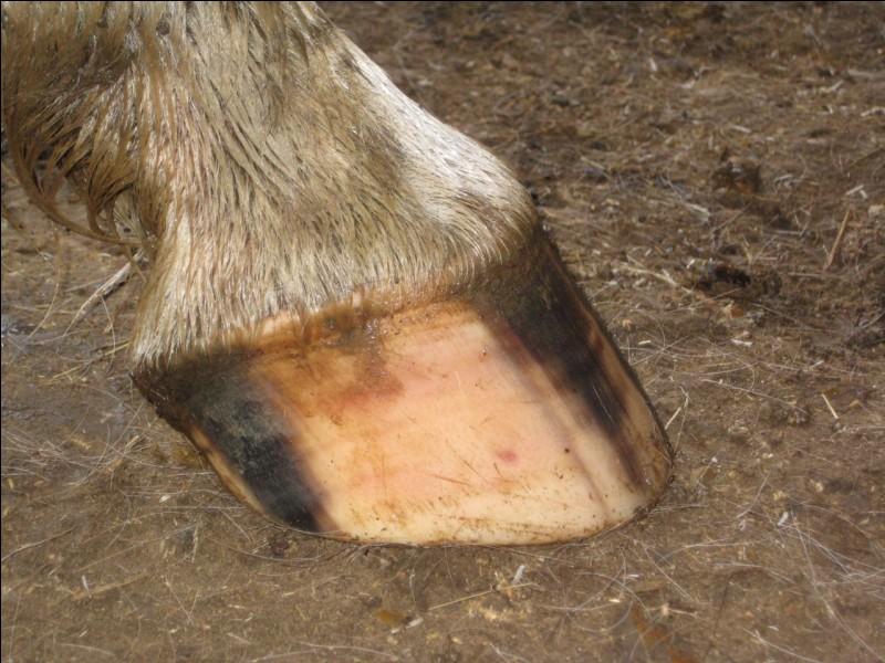 Quelle blessure peut toucher la paroi du sabot ?