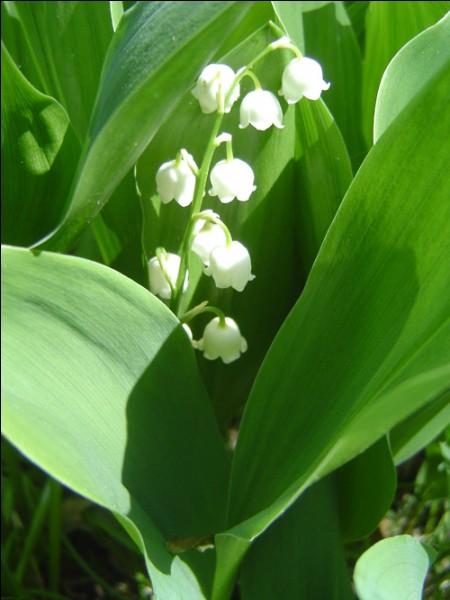 Quizz cueillons des fleurs anglaises quiz anglais - Nom de fleur en anglais ...