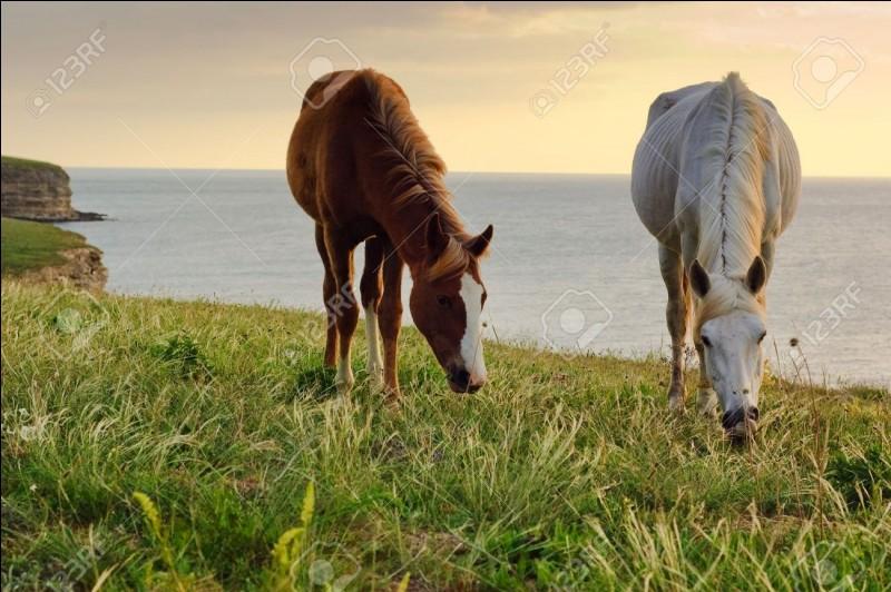 Comment s'appelle le harnachement pour ramener le cheval du pré ?