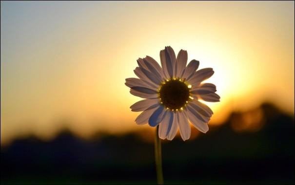 """Il a écrit """"Pauvres fleurs d'un jour, jouissez de votre existence passagère sous le brillant soleil du matin de la vie"""", dans son livre """"David Copperfield"""" :"""