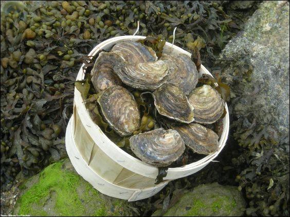 Dégustez la célèbre huître plate de Riec-sur-Bélon, commune bretonne de l'arrondissement de Quimper, dans le département...