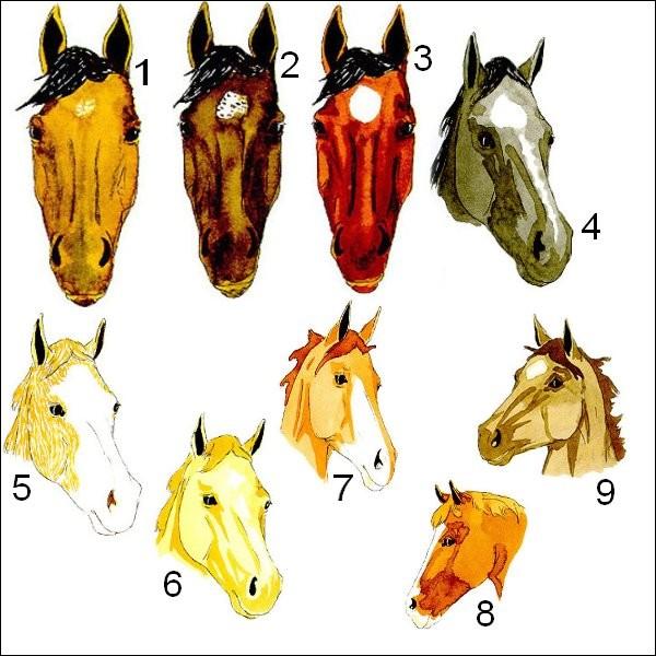 Quel est le cheval qui boit dans son blanc ?