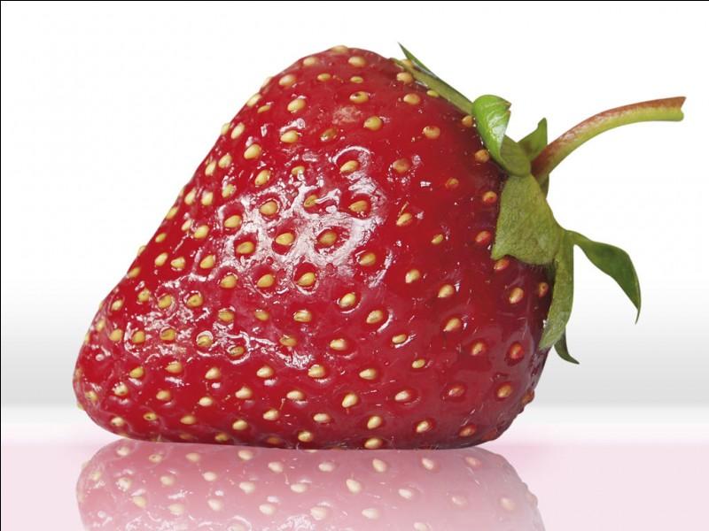Que fait une fraise sur le dos d'un cheval ?