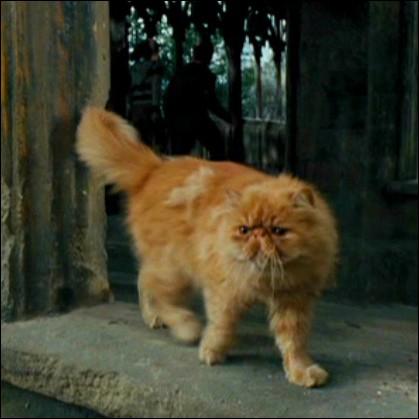 Comment le chat d'Hermione Granger s'appelle-t-il ?