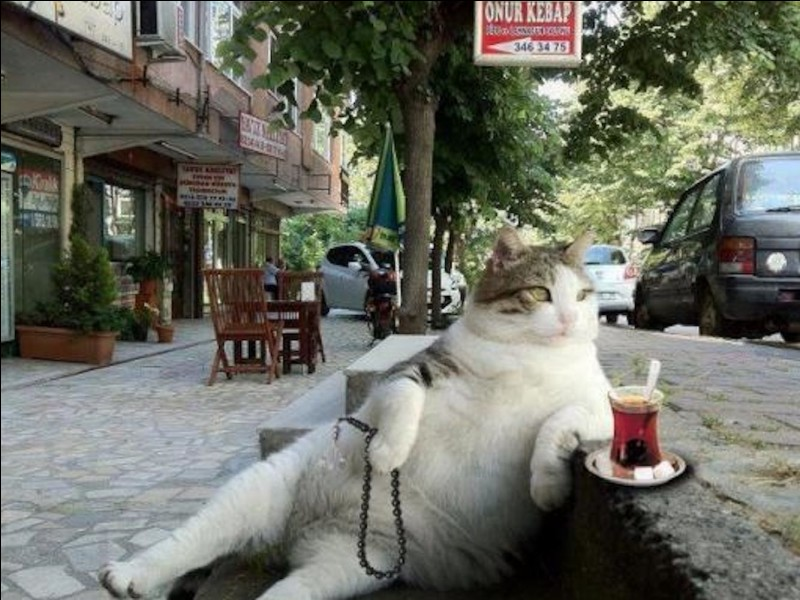 Tu trouves un animal (chien ou chat) dans la rue, tu...