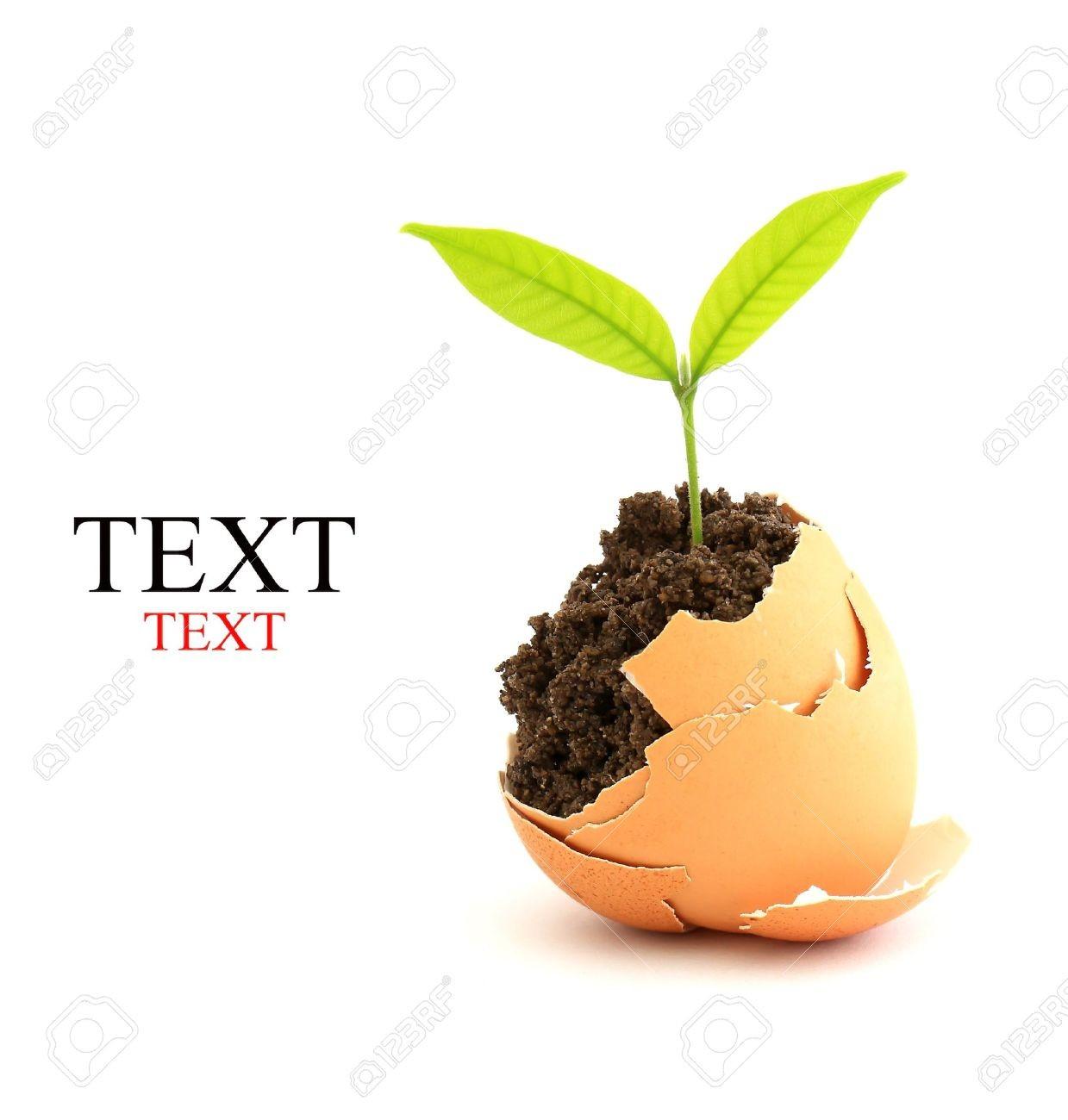 Quelle plante es-tu ?