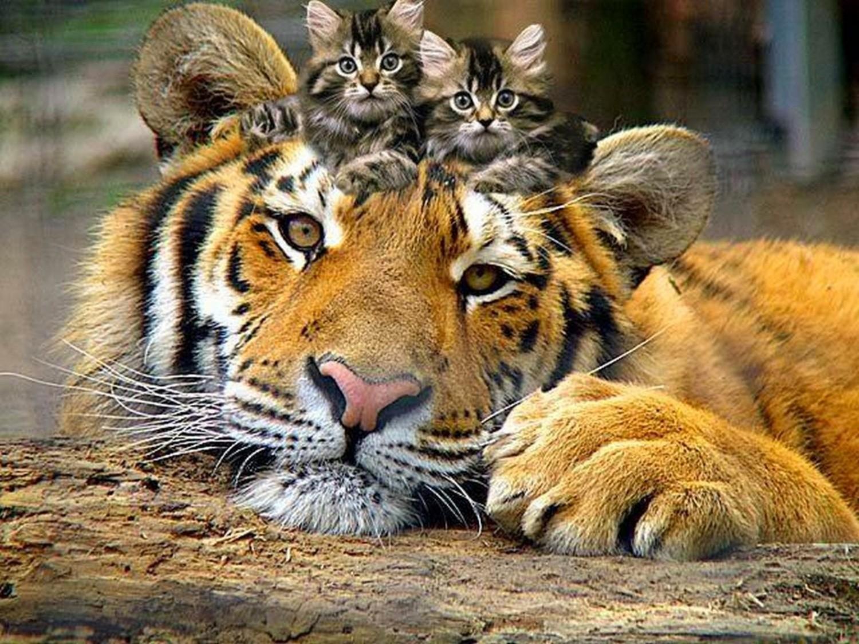 """Résultat de recherche d'images pour """"felins"""""""
