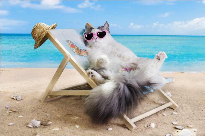 Que fais-tu pendant les vacances ?