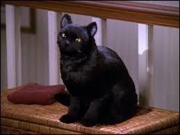 Quel est le nom du chat de Sabrina l'apprentie sorcière ?