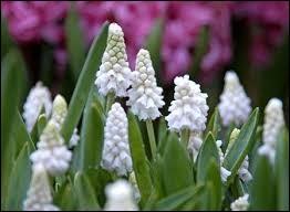 Connaissez-vous le nom de ces fleurs ?