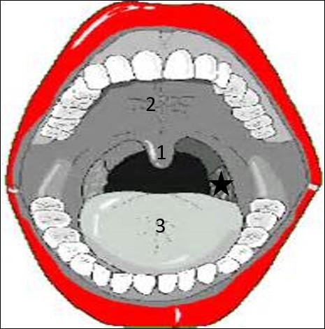 On en arrive à notre bouche avec ce joli schéma.Quel organe, bien gênant en cas d'angine, est associé à l'étoile noire ?
