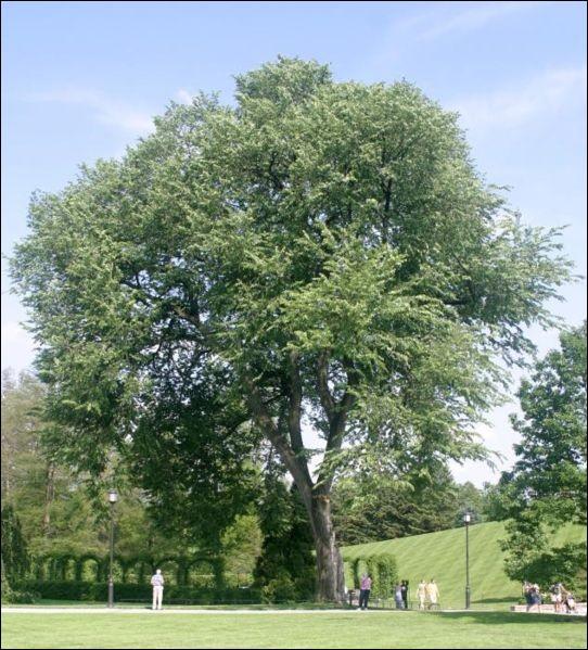 Quel est l'arbre qui a pratiquement disparu en Europe au cours de ces dernières années ?
