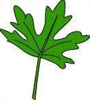Quiz estival botanique n°5