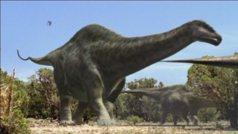 Quel est ce dinosaure diplodocoïde ?