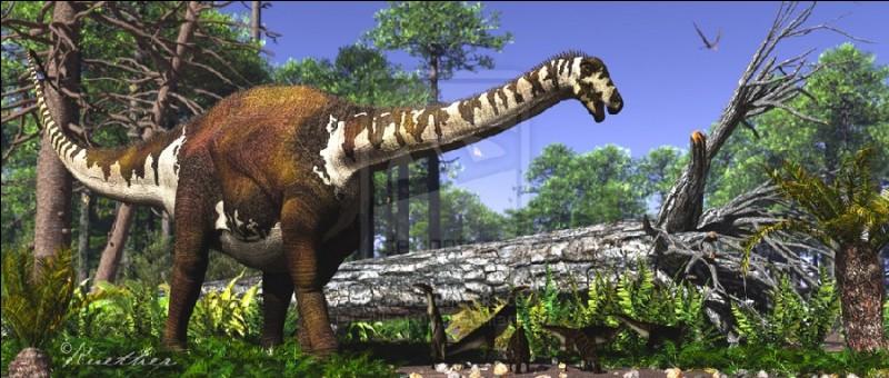 Quel est ce dinosaure rebbachisauridae ?