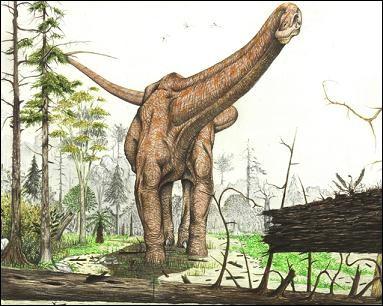 Quel est ce dinosaure titanosauridae ?