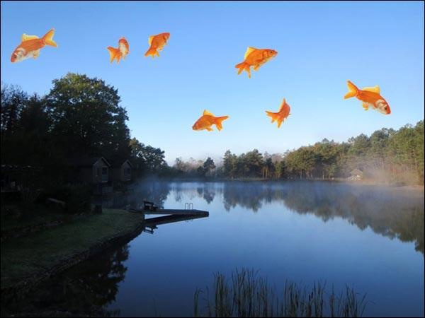 Les poissons volants existent.
