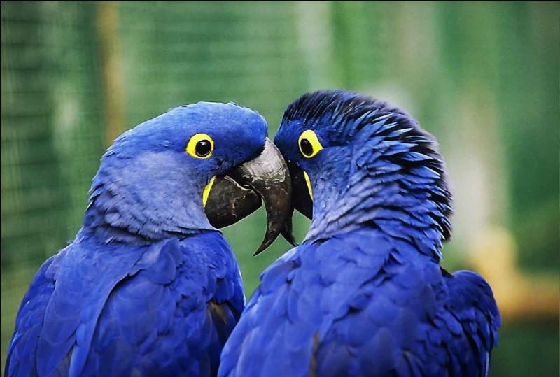 """""""Ars"""". Insérez une lettre dans ce mot pour reconnaître ces oiseaux."""