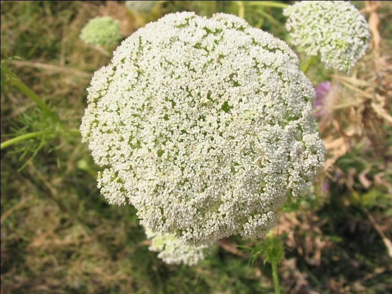"""Trouvez le nom de cette plante en insérant une lettre dans le mot """"ami""""."""