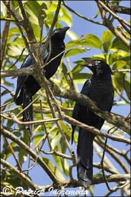 """Ces oiseaux se cachent dans les palétuviers. Trouvez leur nom en insérant une lettre au mot """"ans""""."""