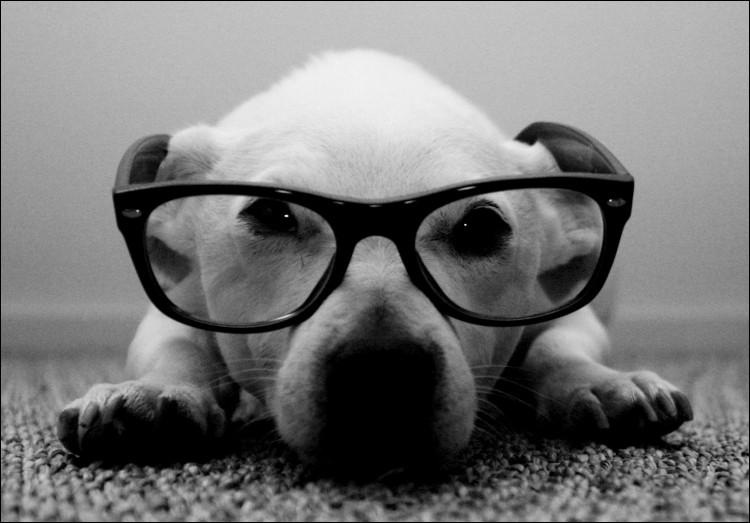 Votre chien ne voit qu'en noir et blanc.