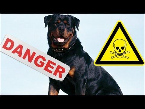 Vous en êtes persuadé : ce sont les chiens de catégorie 1 et 2 qui sont les plus agressifs et infligent le plus de morsures.