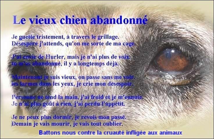 Une année pour votre chien équivaut à 7 ans de vie humaine.