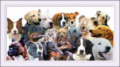 Vous apprenez qu'il existe plus de 319 races de chiens dans le monde.