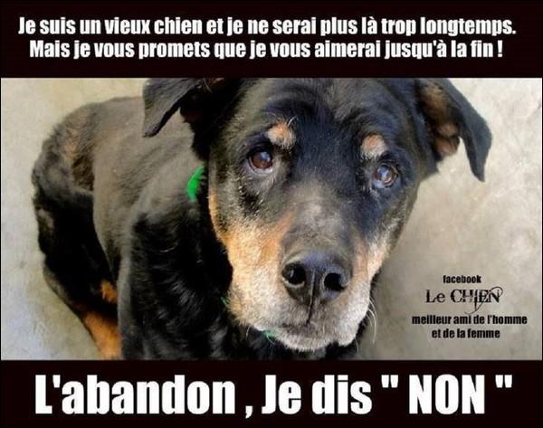 Vous n'adopterez jamais un chien dans un refuge car : « chiens de refuge est synonyme de chiens à problèmes ».