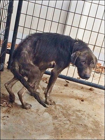Un chien peureux est forcément et uniquement un chien qui a été battu.