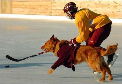 Votre chien peut avoir des crises de hoquet.