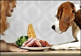 Votre chien a un sens du goût plus développé que l'humain.