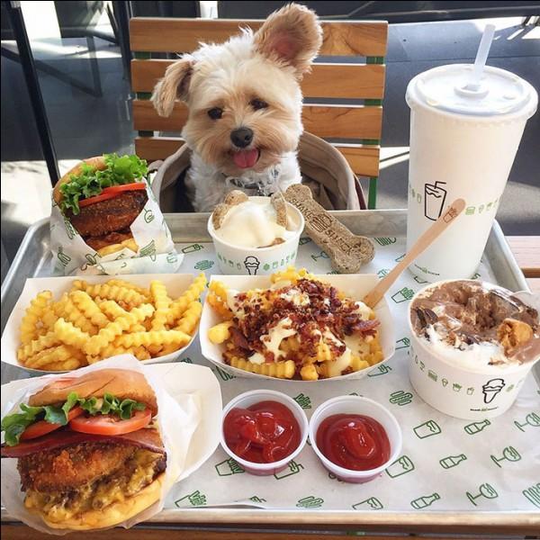 Votre chien a donc besoin d'une alimentation variée.