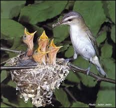 Dans quoi les oiseaux élèvent-ils leurs petits en général ?