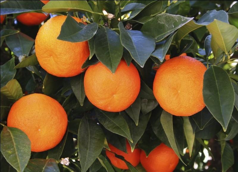 Quel pays est le premier producteur mondial d'oranges ?