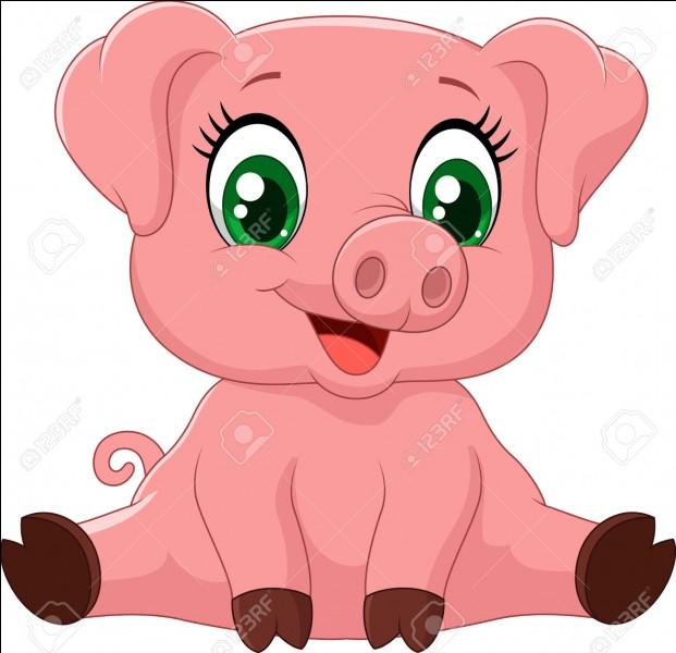 Le cochon est :