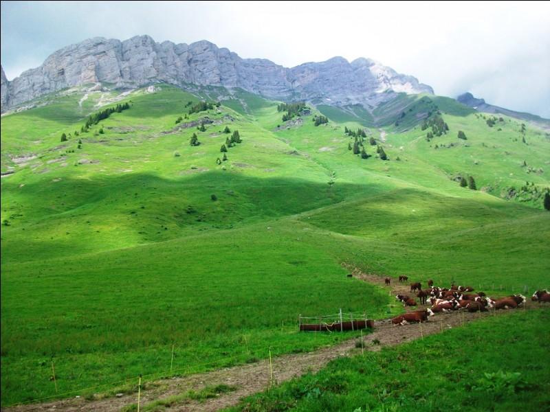 Parmi ces races bovines, laquelle est savoyarde ?