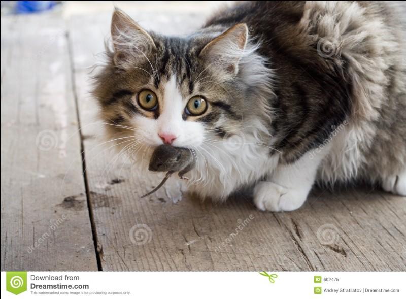 Quand le chat n'est pas là, quels animaux dansent ?