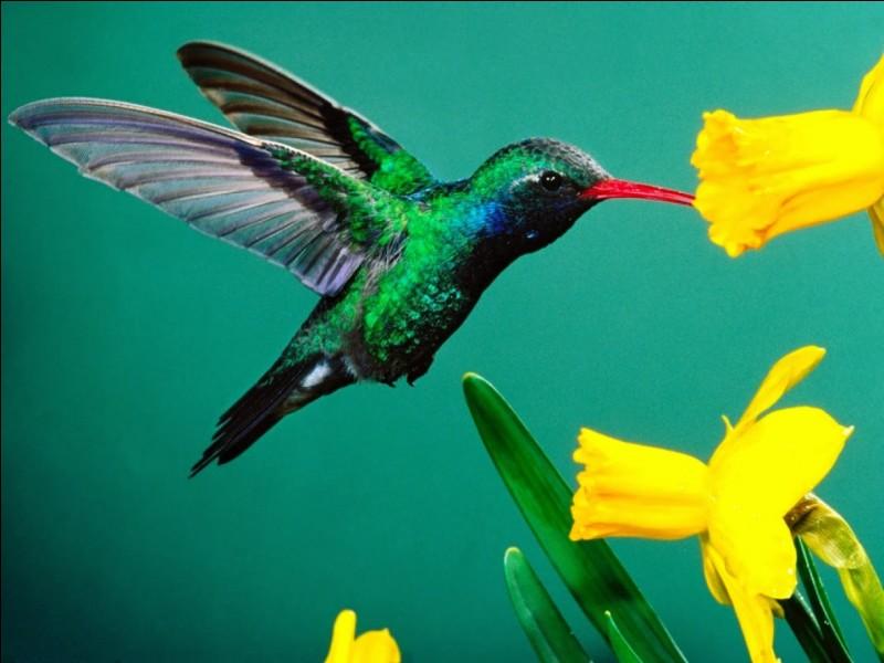 Quelle est la première lettre de l'oiseau le plus petit du monde ?