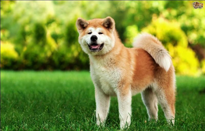 Combien de races de chiens viennent du Japon ?