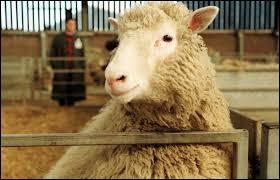 La brebis Dolly devient le premier mammifère cloné au monde.